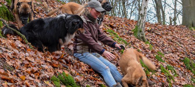Notre première balade canine du 8 décembre dans la campagne de Grez-Doiceau