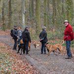 Groupe de promenade en forêt