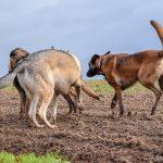 3 chiens qui font connaissance