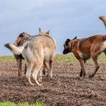 3 chiens en contact
