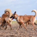 Groupe de chien dans le champs