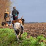 groupe de promenade dans les champs
