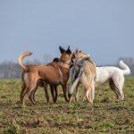 interaction entre 4 chiens