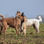 échanges entre chiens