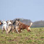 Rassemblement autour du chien loup