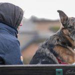 chien moucheté sur le banc