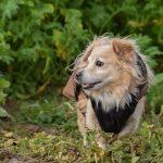 Belle croisée roumaine avec manteau