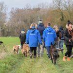 Randonnée canine dans les champs