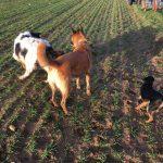 Bande de chiens qui jouent