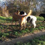 Malinois et chien de berger qui interagissent