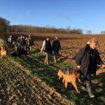 Berger Allemand lors d'une marche canine