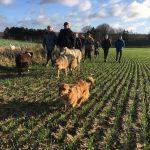 Malinois, chien-loup et berger gambadant