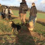 Randonnée canine de groupe