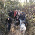 Braque et chien-loup sur chemin étroit