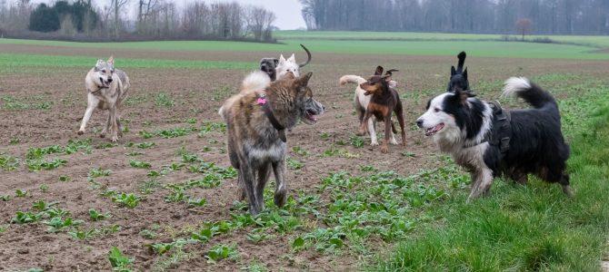 Notre première balade canine du 12 janvier 2018