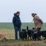 Malinois, Labrador et chiens de berger