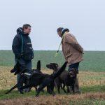 Labrador, Malinois et leur maîtres