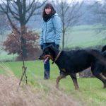 Joli chien noir et son collier brun