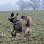 Petit chien qui court dans les champs
