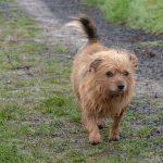 Petit chien les poils au vent