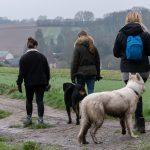 Berger blanc suisse et Rottweiler en balade
