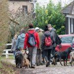 Rottweiler, chien-loup et chiens de berger