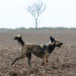 Petit chien gambadant dans les champs