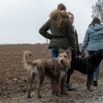 Rottweiler et un compagnon