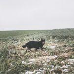 Joli chien noir dans les champs