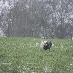 Petit chien et son manteau