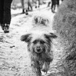 Petit chien au poils longs