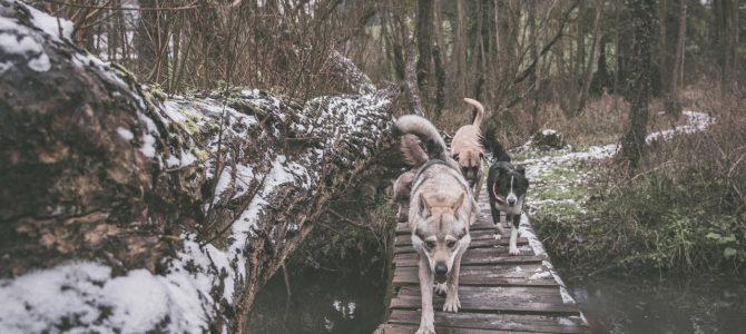 Balade canine du vendredi 25 janvier