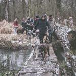 Chien-loup et Boxer qui font la course