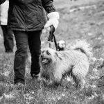 Petit chien à poils longs