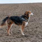 chien en promenade avec Julie Willems