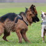 chiens s'amusant ensemble