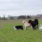 groupe de chien profitant des champs