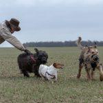 chiens en groupe