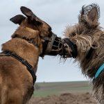 bisous entre chien
