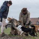 groupe de chien en promenade avec Julie willems
