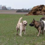 Chiens en balade avec Animal rescue center