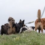 balade avec animal rescue center