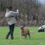 Malinois avec Julie Willems