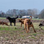 Troupe de chiens en plein jeu