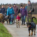 Baladeurs en compagnie des chiens