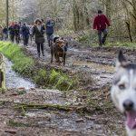 Promeneurs en forêt accompagnés de chiens