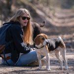 Beagle profitant d'une petite pause