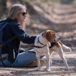 Beagle et maître regardant dans la même direction