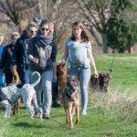 randonneurs avec chiens