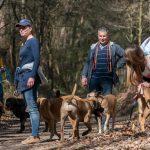 Promeneurs et leurs chiens
